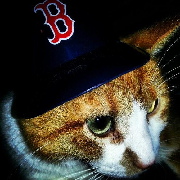 Cat with a Red Sox hat